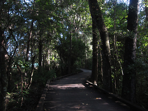Wooded paths