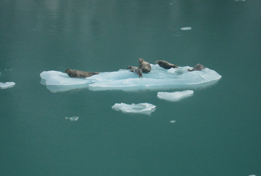 Seal families go floating by