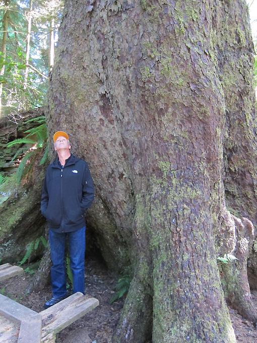 We named this tree Big Bertha