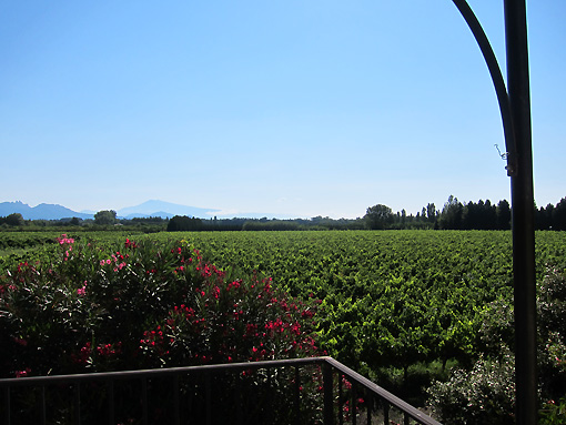 Looking over the vineyards