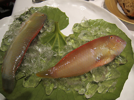 We are shown the wrasse before the cooked ones are presented