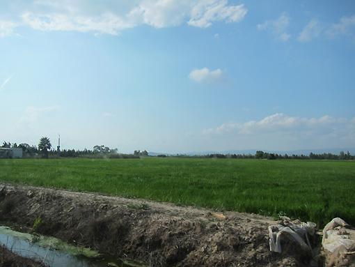 rice fields forever