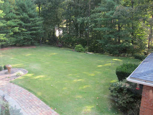 View of the backyard from the dining room
